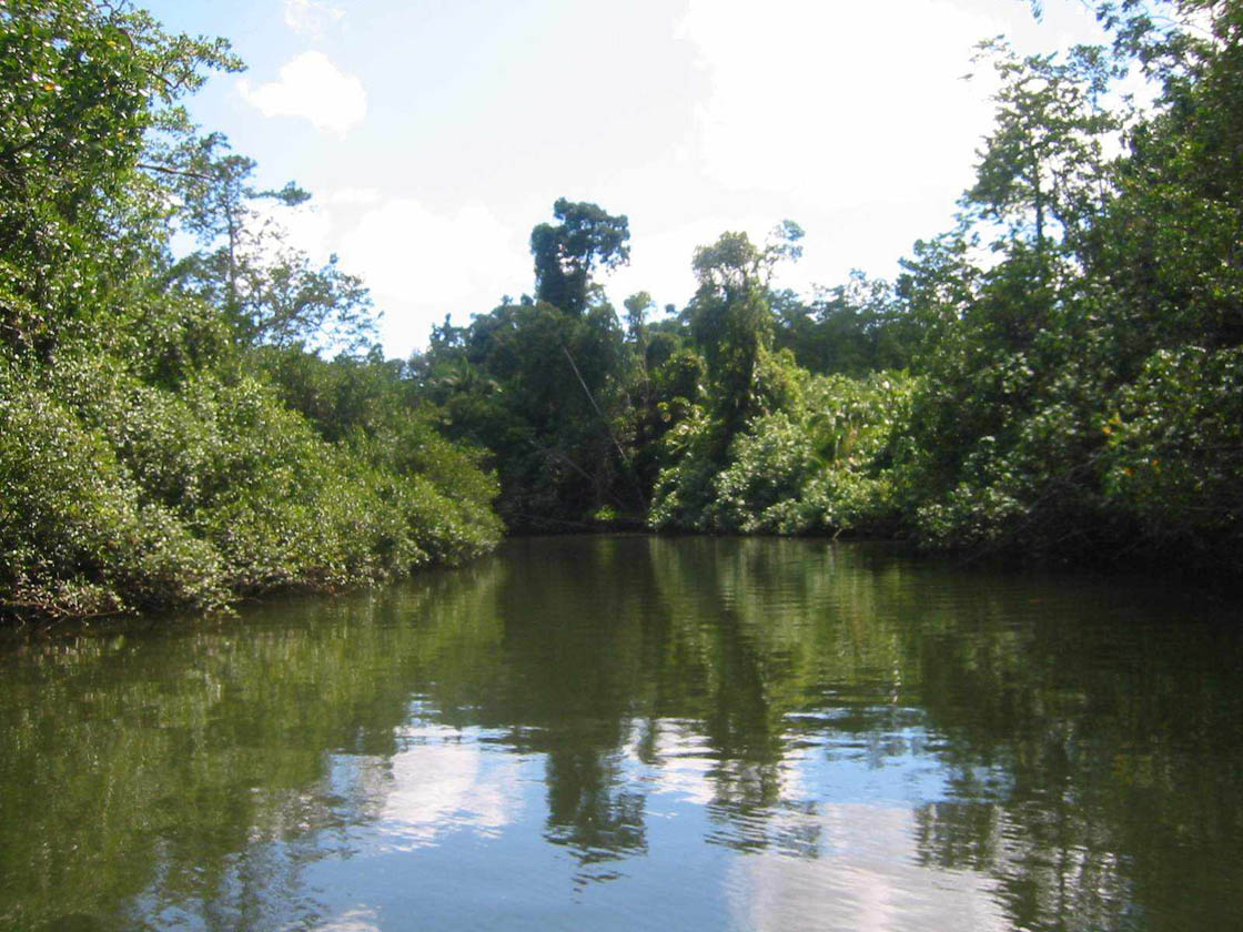 Rainforest06
