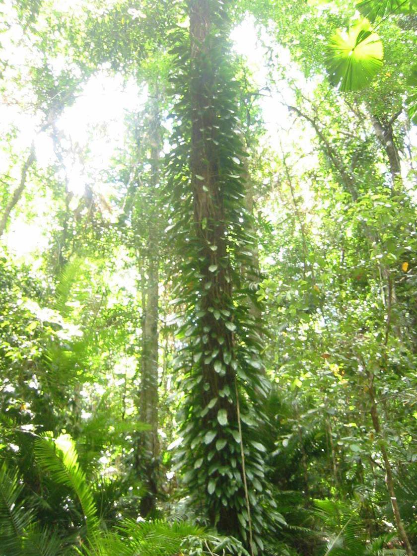 Rainforest07