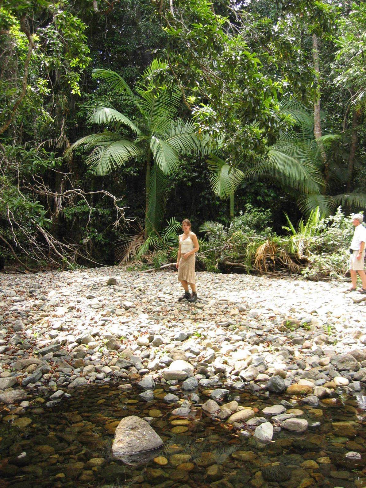 Rainforest09