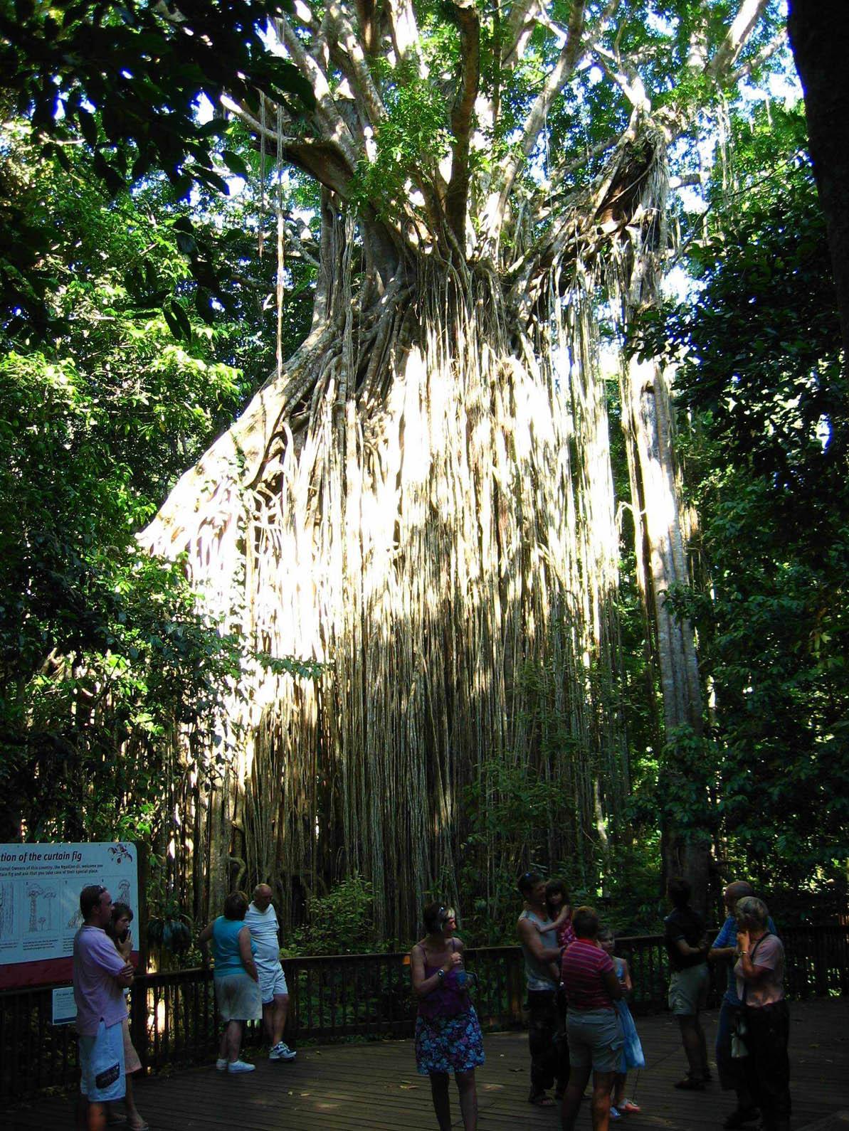 Rainforest12