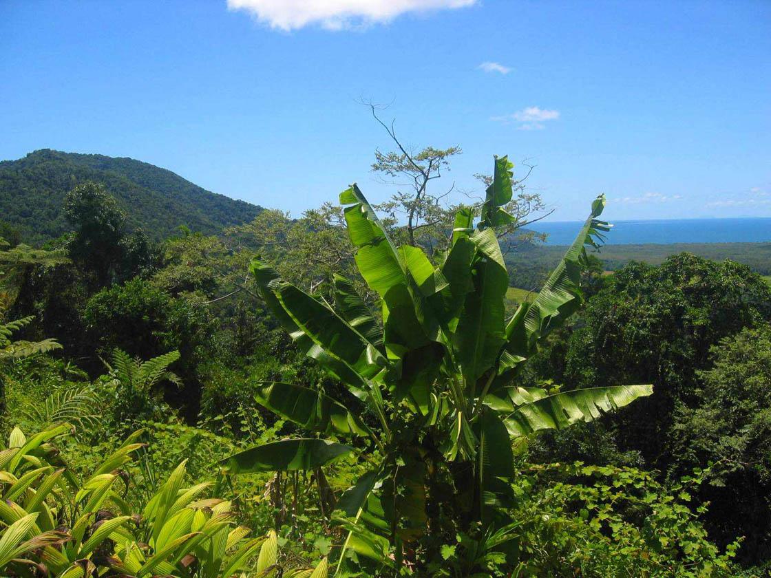 Rainforest18