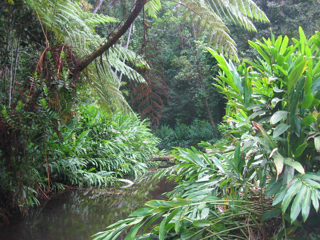Rainforest21