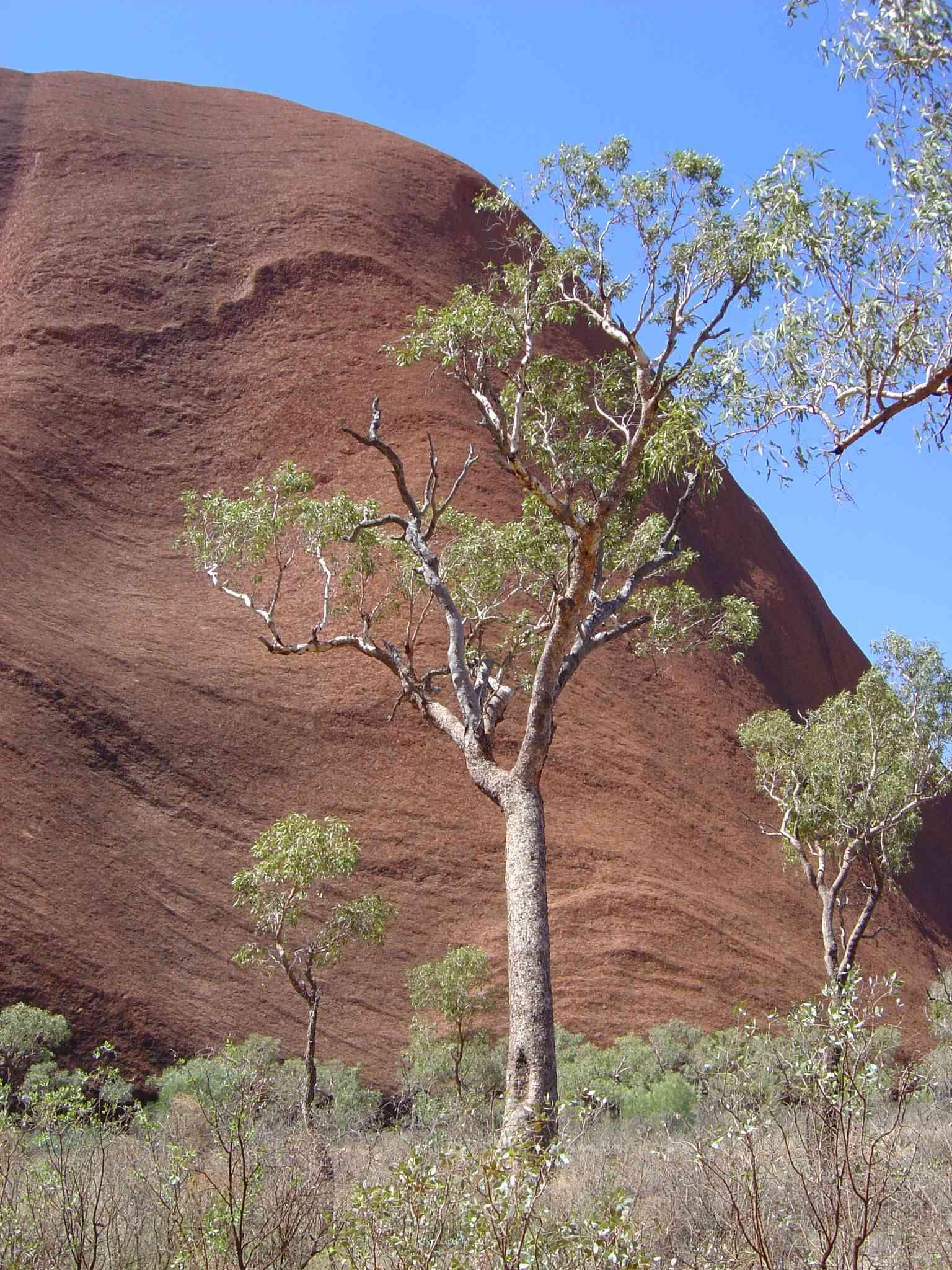 Uluru08